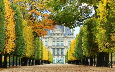 Jardins-des-Tuileries-en-automne