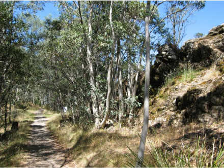 track to camel' hump Mt Macedon